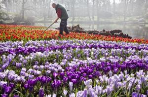 praca-holandia-ogrodnictwo